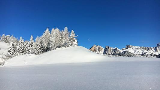 Pine Trees on Snow