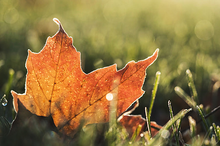 An orange tree leaf on the ground in Autumn