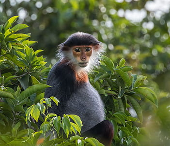 shallow focus photography of black and brown monkey