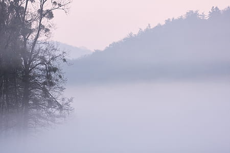 fog, mist, foggy, morning, sunrise, simplistic