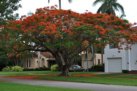 red and green tree near house during daytime