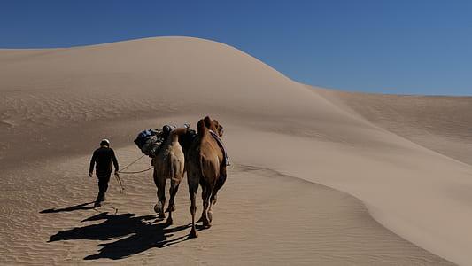 two brown camels walking in desert during daytime
