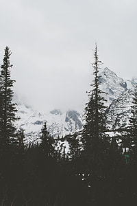 snow covered mountain near trees