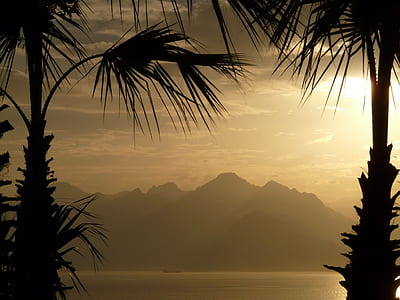 silhouette of misty mountain in between silhouette of two palm trees