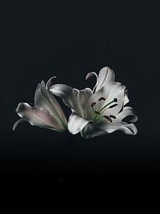 silver flower illustration