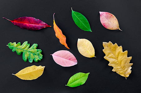 ten assorted-color-and-shape leaves on black surface
