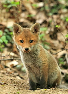 selective focus of brown baby fox
