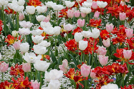 white, pink, and red flowers during daytime