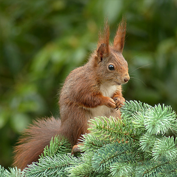 selective photography of red squirrel
