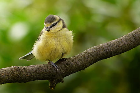 shallow focus photography of yellow and brown bird