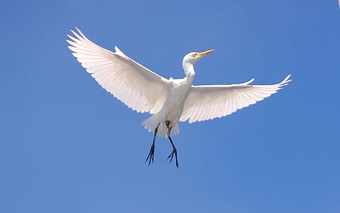 capture image of a flying crane