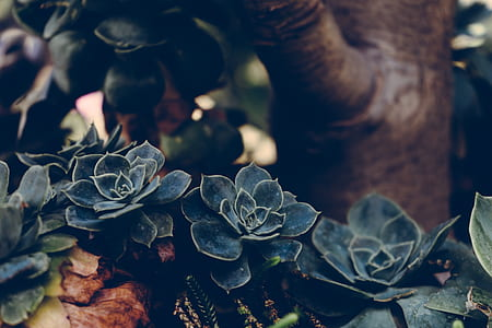 selective focus photography of black succulent plant