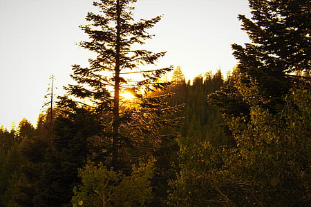 Tall Tree Between Yellow Leaf Trees during Golden Hour