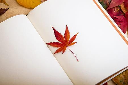 brown leaf on white sketchbook