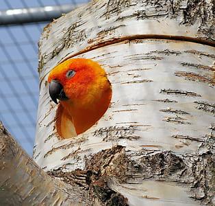 sun parakeet in birdhouse