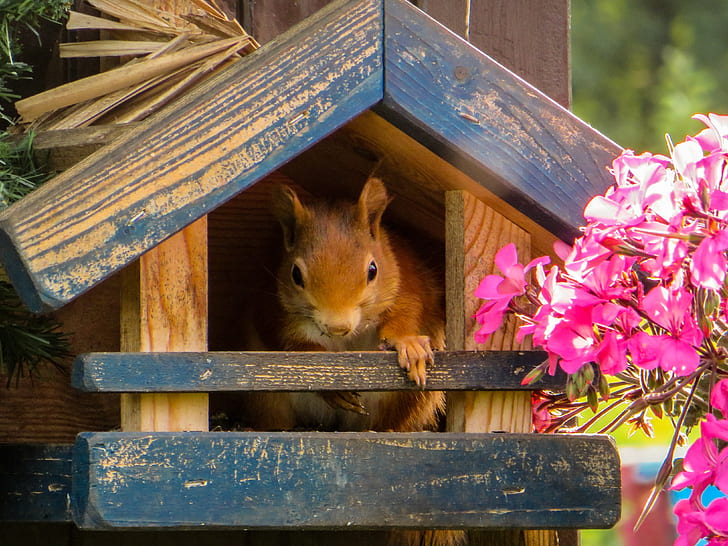 brown squirrel in blue and brown wooden house