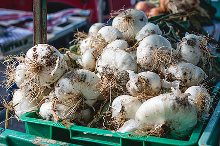 Dirty garlic on a market