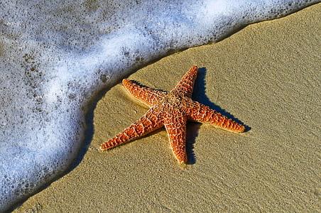 red starfish in seashore