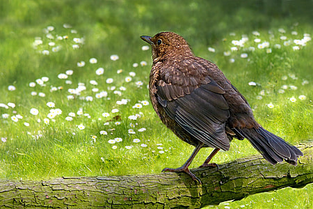 brown bird on branch during daytime