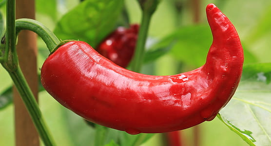 close-up photo of red chili
