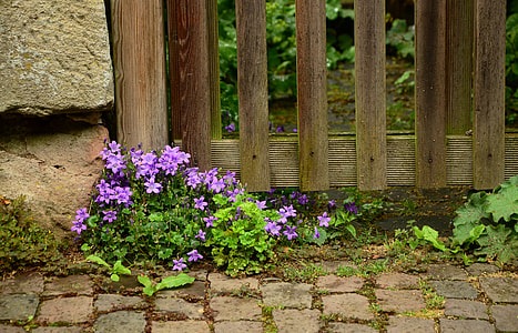 purple flower with green leafed plants near brown wooden fence