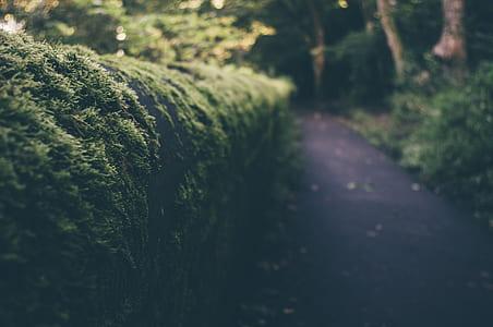 tilt-shift lens photography of hedge