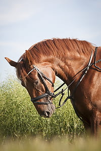 photography of brown horse beside grasses