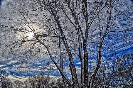 gray trees under blue sky and white clouds