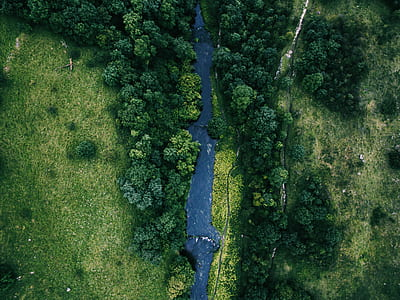 aerial photography of forest near river during daytime
