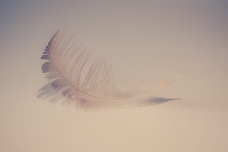 closeup photo of white feather