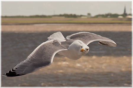 selective focus photo of flying white and gray seagull