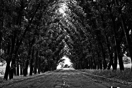 grayscale photography of pathway with tall tress in between