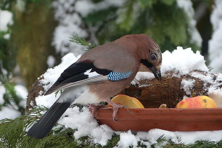 brown and black short beak bird