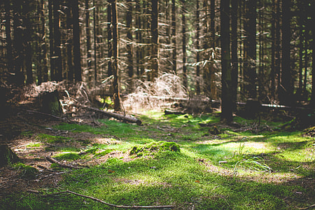 Green Carpet in Forest