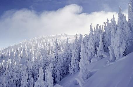 white snowy trees
