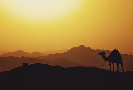 silhouette landscape photo of camel