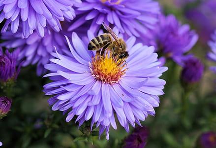 selective focus photo of bee on purple flower