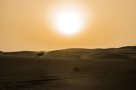 Desert Under Yellow Sunset