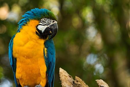 Zoo Parque Itatiba - Sp - Brasil