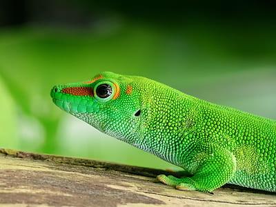 shallow focus photography of green lizard