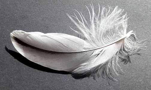 gray feather on gray surface