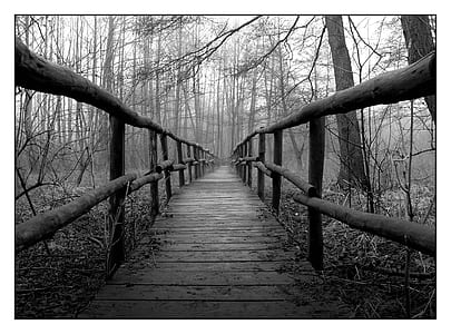 grayscale photo of a wooden bridge in the middle of woods