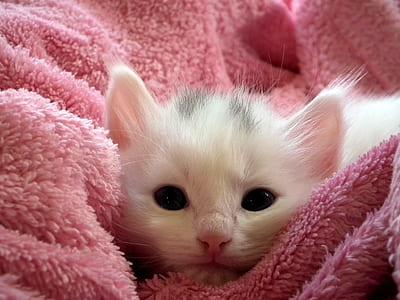 White Kitten on Pink Throw