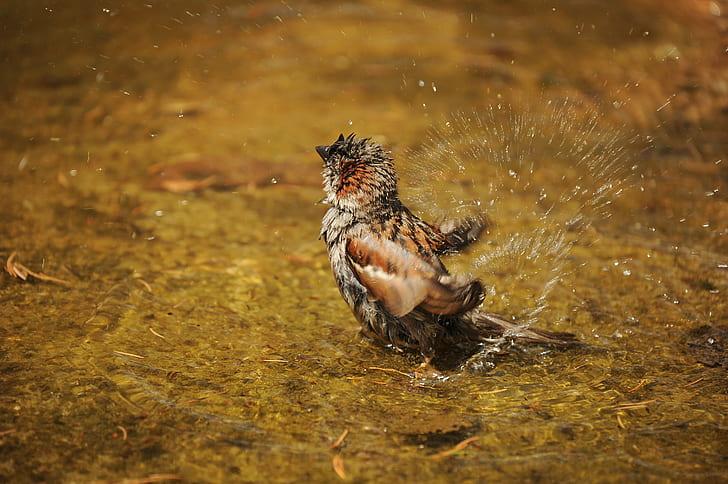 selective focus photography of brown bird splashing