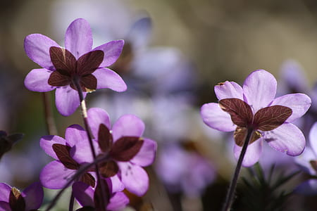 purple flowers photography