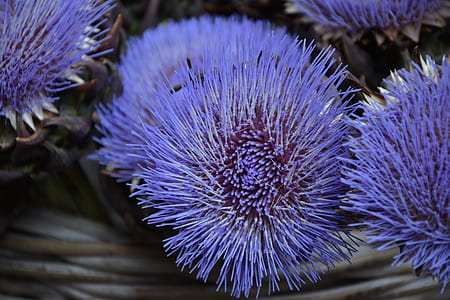 close up photography of purple flower