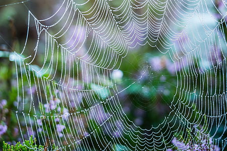 closeup photo of spiderweb