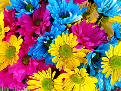 purple, yellow, and blue petaled flower photography