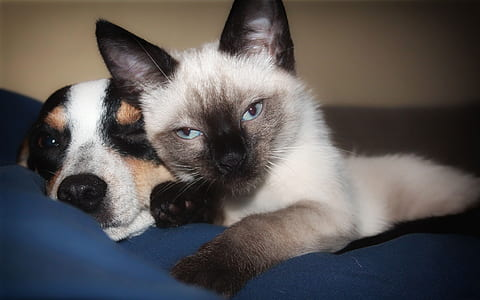 short-coated and short-cut black-and-white cat and dogs