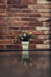 White Aster Flower in a Vase